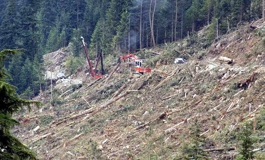 DECIZIE UNICĂ : Două ONG-uri din România au obținut în instanță stoparea defrișării a 150 de hectare de pădure!