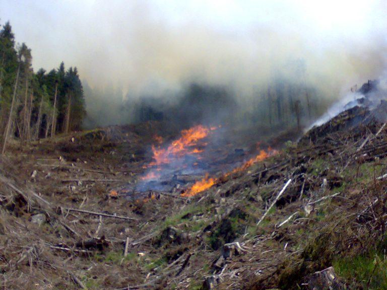 Aproape 100 de incendii de pădure(peste 550 hectare afectate) în România – în primele 6 luni ale anului; Romsilva anunță măsuri suplimentare