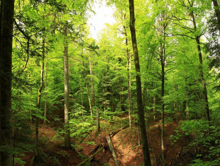 Un bărbat și un copil au fost loviți de trăsnet într-o pădure din Suceava