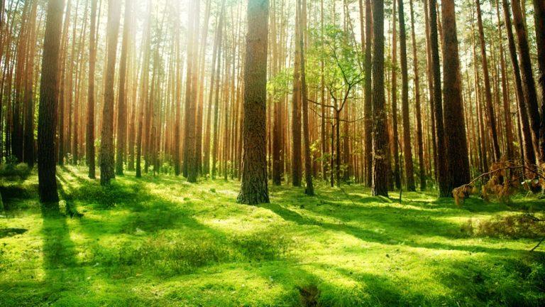 APEL IMPORTANT/Ministrul Apelor și Pădurilor, Doina Pană : termenul pentru compensațiile proprietarilor de pădure din ariile protejate expiră în curând!