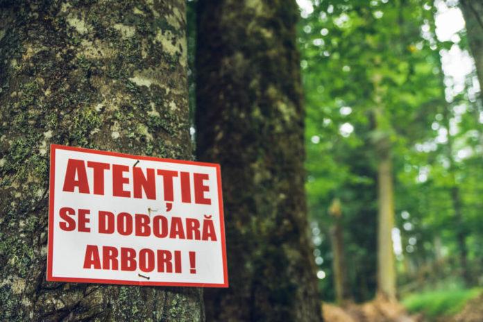 monitorizarea pădurilor