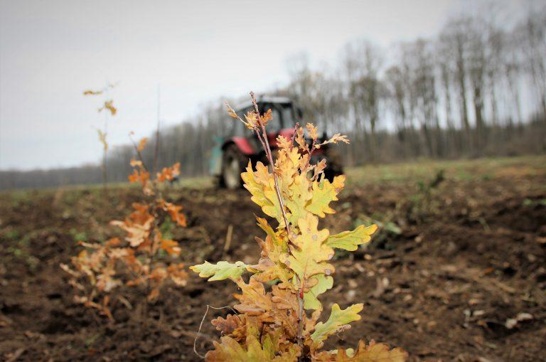 Ministrul Mediului contestă Strategia pentru Păduri Europeană: Avem ținte ambițioase