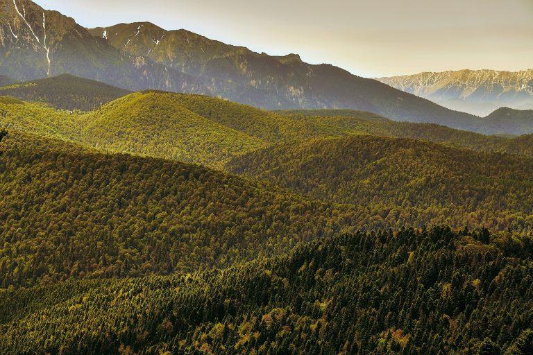 Europarlamentar USR PLUS: Comisia Europeană vrea 3 miliarde de copaci în plus până în 2030. România pierde 3 hectare de pădure pe oră